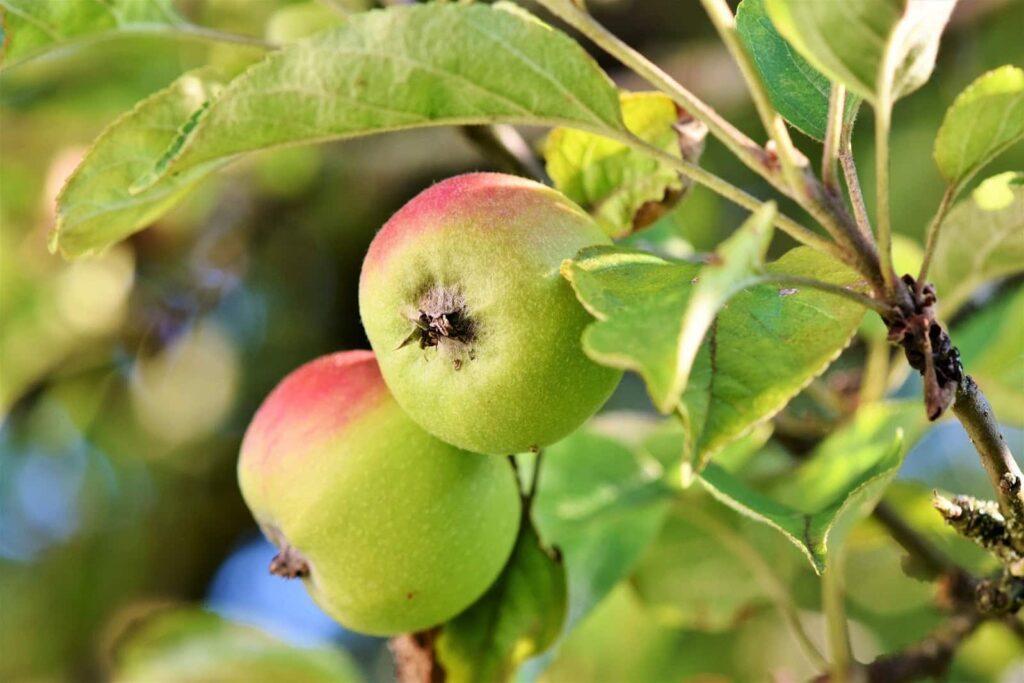 Produits sains et naturels Biobala